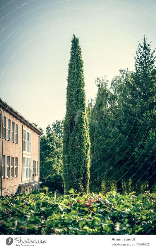 Spitzer Baum im Garten Sommer Natur Tier Wolkenloser Himmel Schönes Wetter Brandenburg Kleinstadt Menschenleer Haus Mauer Wand Fenster ästhetisch authentisch