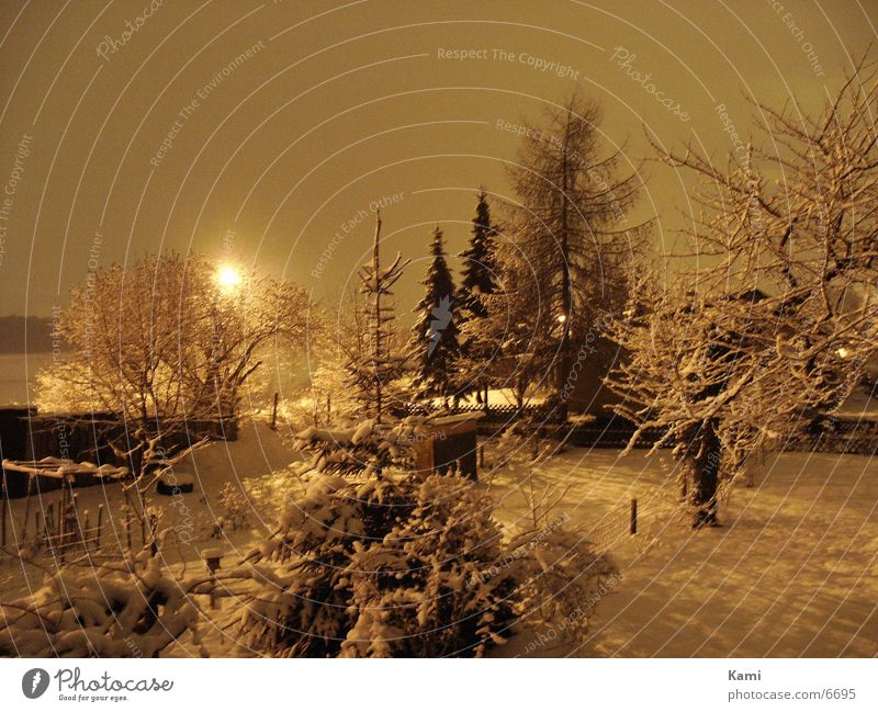 Wintergarten Baum dunkel Schnee Garten Landschaft Sträucher Dorf