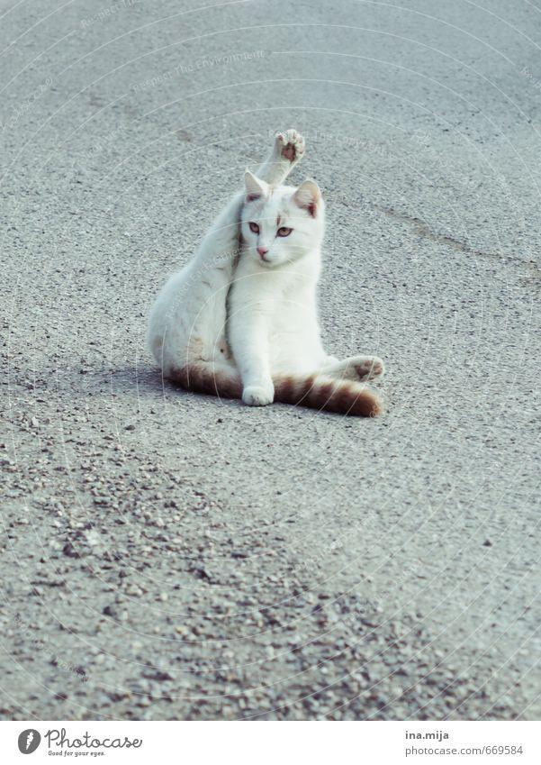 Dehnübungen Sport Fitness Sport-Training Yoga Tier Haustier Katze Fell Zoo 1 Tierjunges Bewegung Reinigen Körperpflege tierisch Tierliebe Tierzucht Tiergesicht