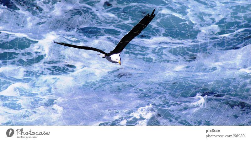 seagull Wasser weiß Meer blau Vogel fliegen Luftverkehr Flügel Brandung Schaum Möwe Lachmöwe