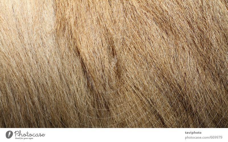 baktrisches Kamel strukturiertes Fell Haut Tapete Zoo Natur Tier Pelzmantel Behaarung authentisch natürlich wild braun Camel Konsistenz texturiert Tierwelt