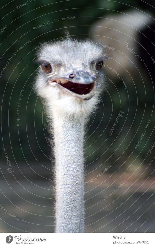 Oiiii! Emu Tier Vogel Kopf Blick Zoo Blumenstrauß
