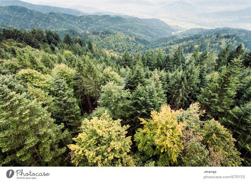 Von oben herab Ausflug Abenteuer Umwelt Natur Landschaft Sommer Herbst Schönes Wetter Baum Baumkrone Wald Hügel Tal außergewöhnlich groß hoch natürlich schön