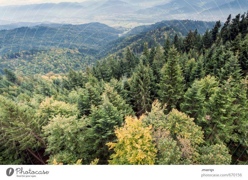 Tiefflieger Natur Pflanze Sommer Landschaft Wald Umwelt natürlich außergewöhnlich Horizont Klima Perspektive Ausflug Abenteuer Hügel gigantisch Mischwald