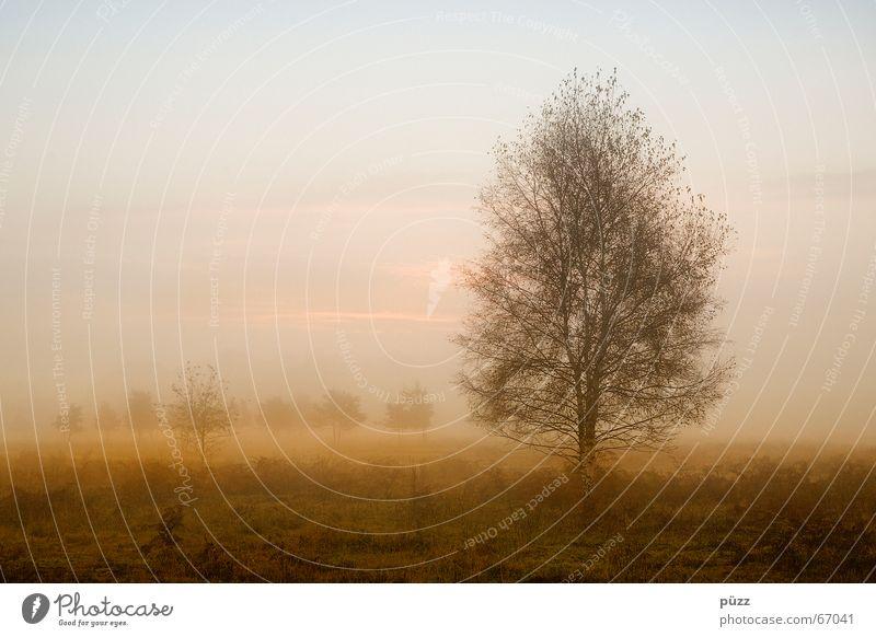 Wahner Heide ruhig Natur Landschaft Sonnenaufgang Sonnenuntergang Herbst Schönes Wetter Nebel Wärme Pflanze Baum Wald Stimmung trüb orange Farbfoto