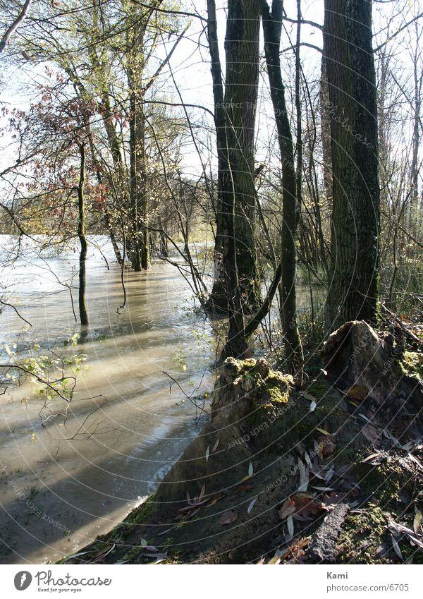 Auenwald im Gegenlicht Hochwasser Baum Fluss Überschwemmung Schatten