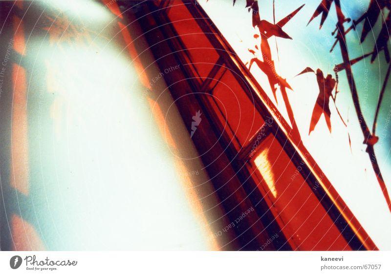 Bambus Fenster rot Wand Asien China Bambusrohr Sydney New South Wales Chinesischer Garten