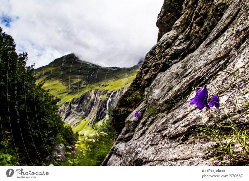 Der Berg ruft 11 - mit Blumen im Vordergrund Umwelt Natur Landschaft Pflanze Urelemente Wolken Sommer Klima Schönes Wetter schlechtes Wetter Baum Blüte Felsen