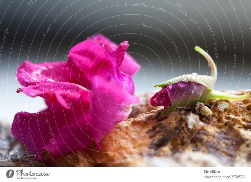 Röslein Pflanze Rose Blüte Garten schön Farbfoto Detailaufnahme Unschärfe