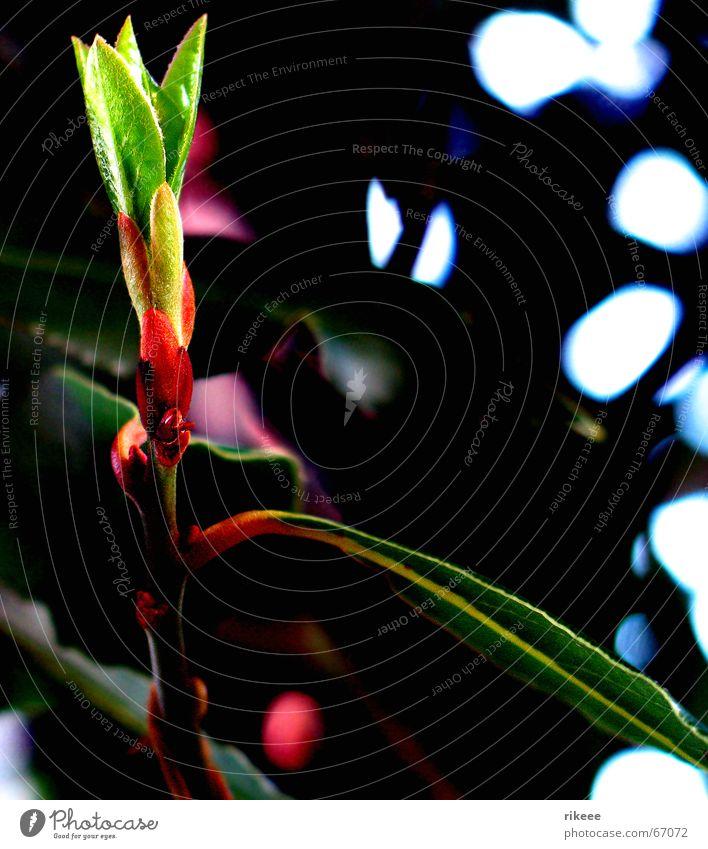 Alles sprießt... Blume Pflanze Frühling grün Umwelt Blüte Blütenblatt aufmachen Licht Blütenknospen Natur Garten Schatten Lampe