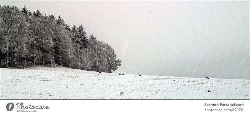 endlich kälte Natur Winter Wald kalt Schnee Feld Nebel Frost November Raureif Reh Vogtlandkreis