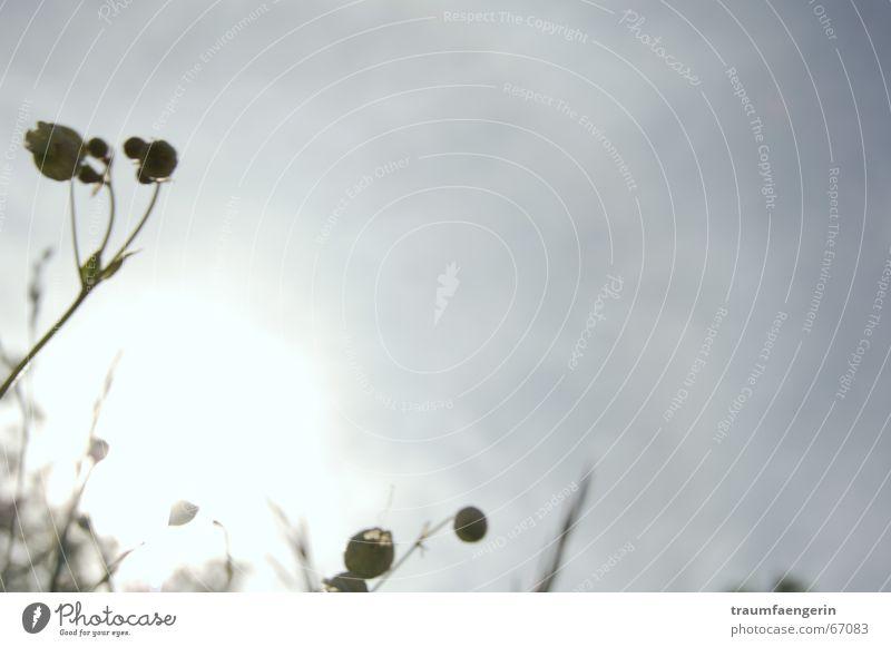 summertime blues grau Wiese Blume Gras Sommer Wolken Trauer trist Auvergne Frankreich Himmel Sonne liegen Blick Gefühle Traurigkeit alles blöd alles toll Glück