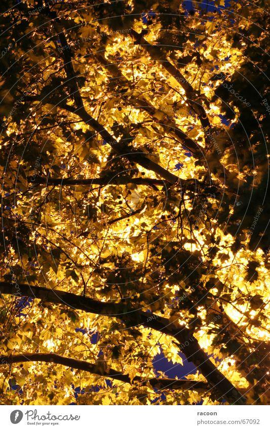Baum-Leuchte Blatt Nacht gelb Gegenlicht Baumkrone fantastisch Lampe Zweig Ast