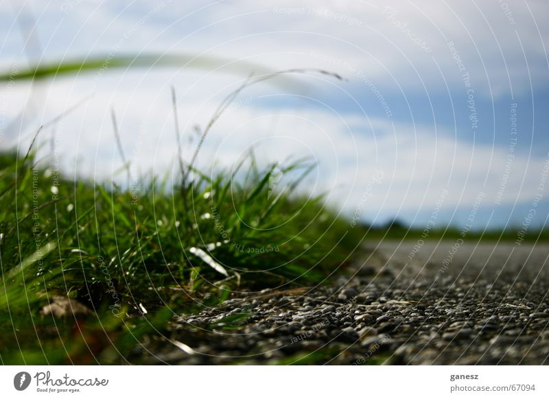 focus on the grass grün Sommer Wege & Pfade Getreide Zoomeffekt