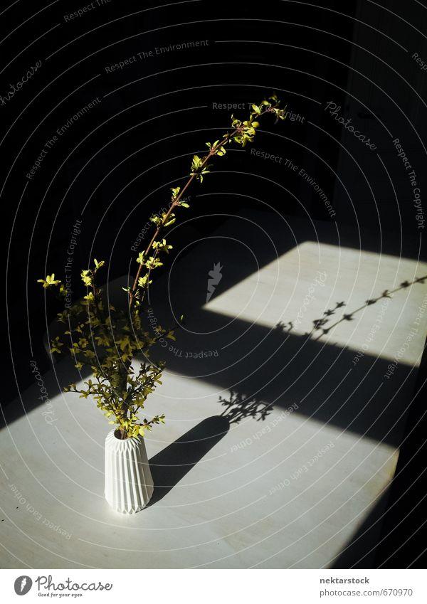 Blumen in einer Vase Natur Pflanze Einsamkeit schwarz gelb Fenster modern Sträucher ästhetisch Hoffnung Schmerz Billig