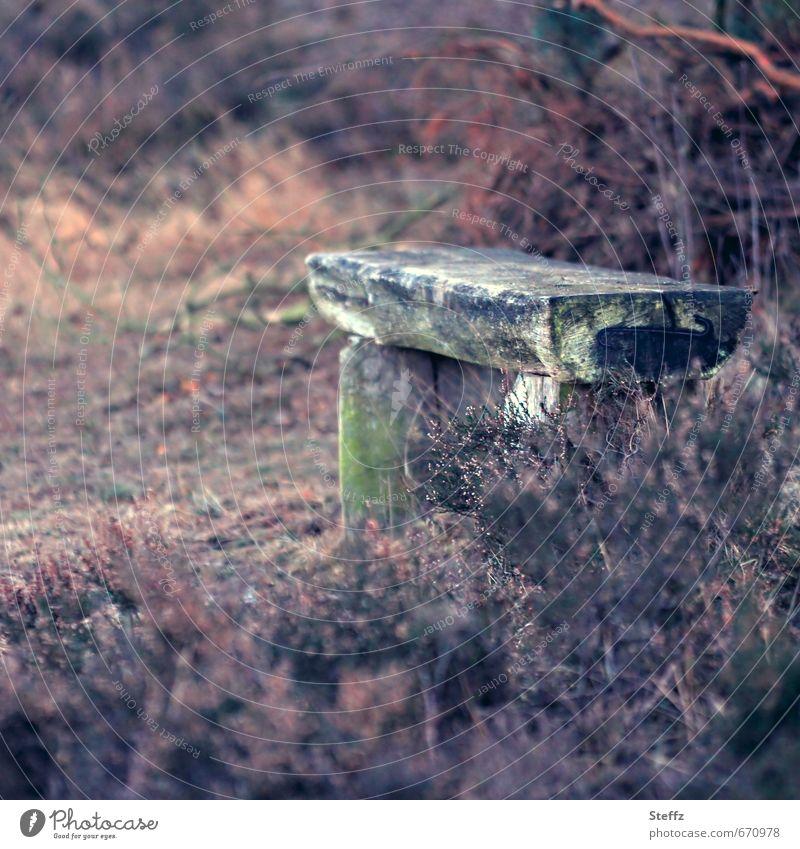 einen Moment verweilen Natur Pflanze Erholung Einsamkeit Landschaft ruhig Stimmung sitzen Sträucher Pause Romantik Bank violett Aufenthalt achtsam Wildpflanze
