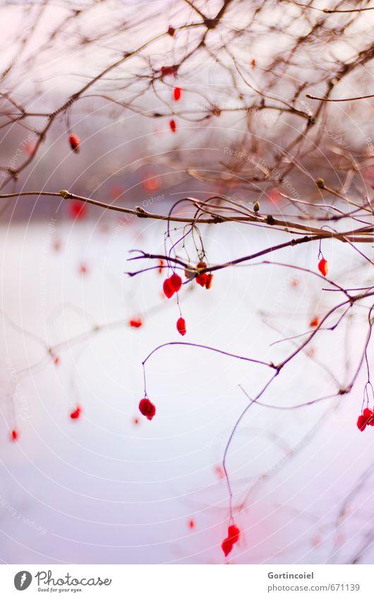 Branches and Berries Umwelt Natur Pflanze Winter Baum Sträucher Seeufer schön rot Beeren Naturschutzgebiet Unschärfe Zweige u. Äste Gemeiner Schneeball Farbfoto