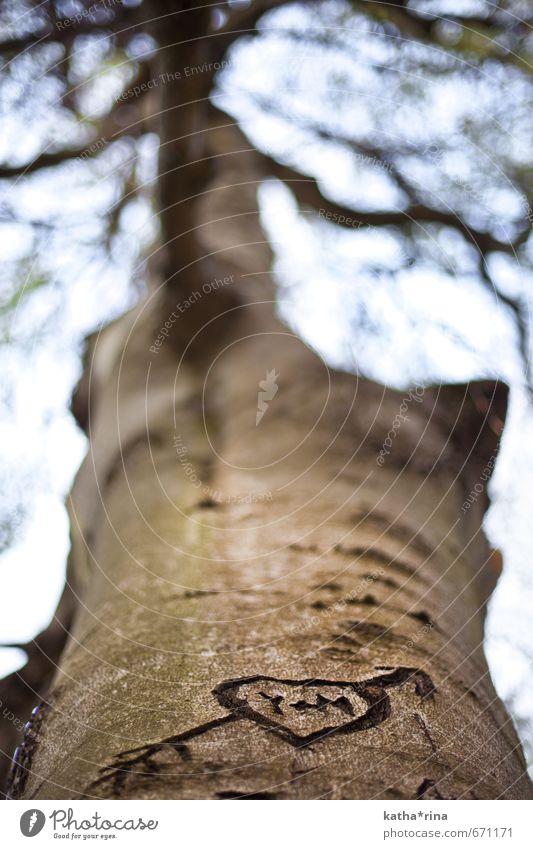 Von Amors Pfeil getroffen Natur Baum Liebe natürlich braun Herz Zukunft Unendlichkeit Romantik Zeichen Kitsch Zusammenhalt Pfeil Verliebtheit Partnerschaft Einigkeit