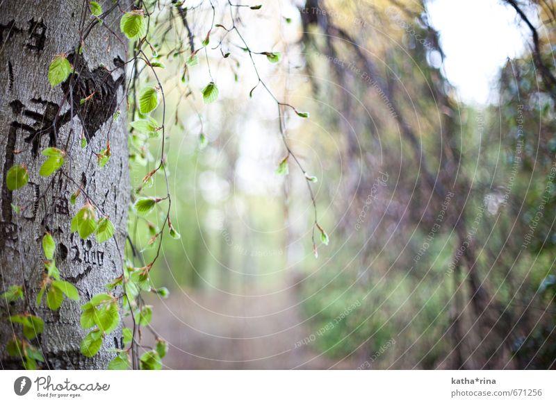 Von Amors Pfeil getroffen Natur grün Sommer Baum Liebe Holz braun Herz Romantik Pfeil Verliebtheit Jena