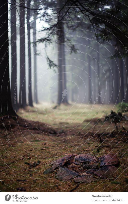 Feuerstelle Ausflug wandern Natur Landschaft Pflanze Nebel Baum Wald Wege & Pfade dunkel ruhig Einsamkeit stagnierend Stimmung Waldlichtung Hochwald Märchenwald