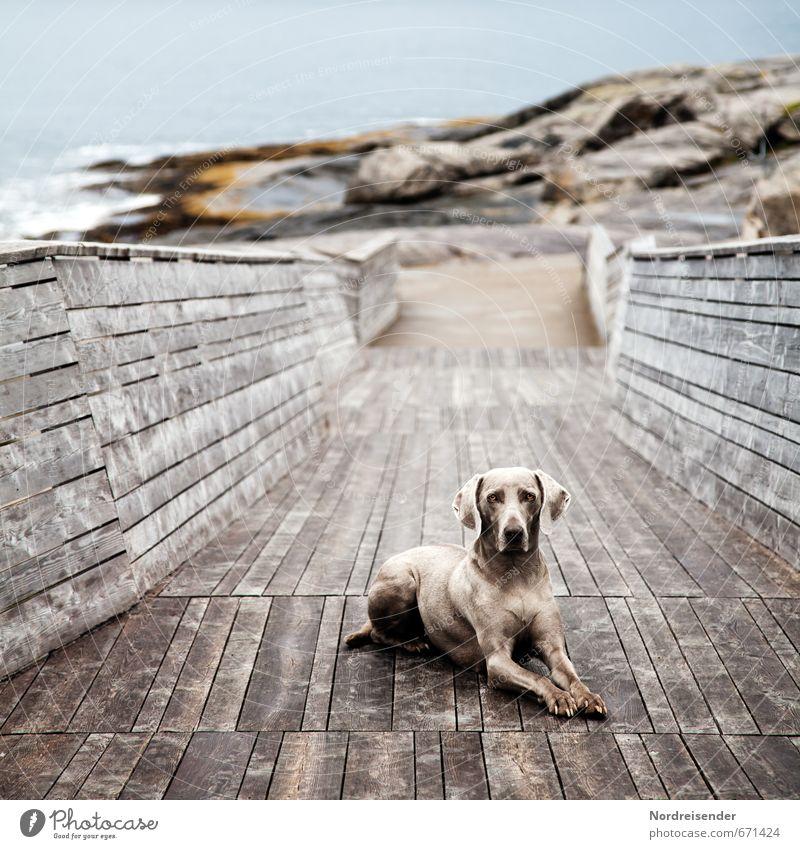 Verschmelzen Hund blau Wasser Meer Erholung Landschaft Tier Wege & Pfade Küste Holz Stein braun Zufriedenheit ästhetisch Wachsamkeit Jagd