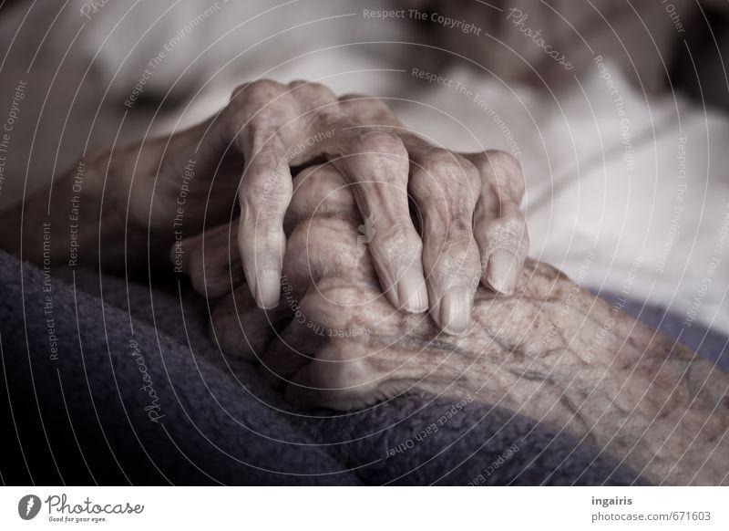 Hunderteins Seniorenpflege Krankenpflege Krankheit Weiblicher Senior Frau Großmutter Arme Hand Finger 1 Mensch 60 und älter alt liegen warten violett weiß