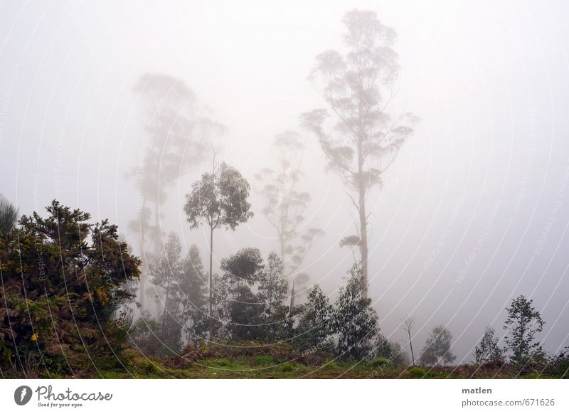 bei Tag und Nebel Natur grün Pflanze Baum Landschaft Winter Wald grau Wetter Regen Nebel Sträucher schlechtes Wetter