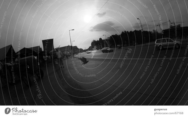 { Abendlicht } Stadt Wolken Straße dunkel Vogel Verkehr Taube Situation