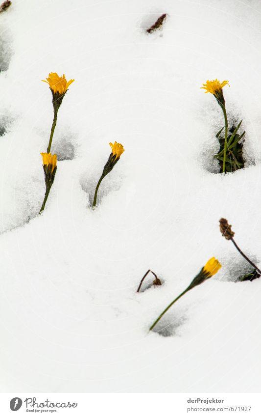 Der Durchbruch Umwelt Natur Landschaft Pflanze Urelemente Sommer Winter Klima Klimawandel schlechtes Wetter Eis Frost Schnee Blume Grünpflanze Alpen