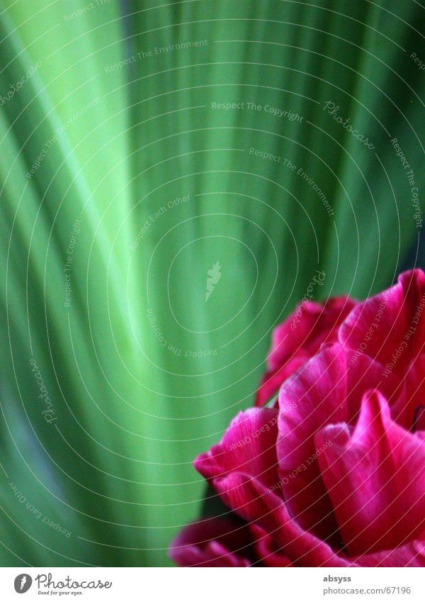 Blumenzeit schön Blume grün Pflanze rot Wachstum harmonisch Anschnitt