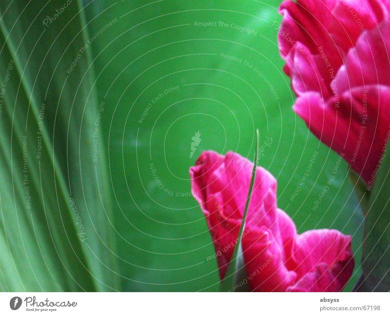 Blumenzeit II grün rot Pflanze Wachstum schön harmonisch esthetisch Anschnitt