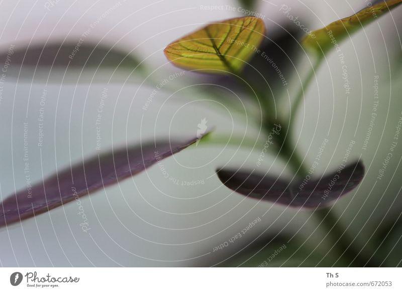 Blatt Natur schön Pflanze ruhig Umwelt Leben Gesundheit Zufriedenheit authentisch ästhetisch einzigartig Blühend Wellness Gelassenheit nah