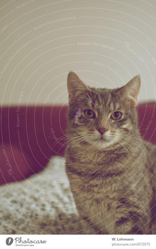 Paulchen Tier Haustier Katze 1 Tierjunges grau schwarz türkis weiß Tierliebe Treue Tierporträt Liebe Neugier Farbfoto Innenaufnahme Experiment Menschenleer