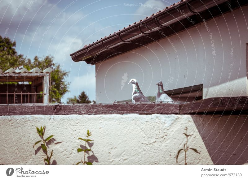 Brandenburgber Idyll Sommer Wolken Haus Tier Wand Mauer Stimmung Vogel sitzen Tierpaar einfach Dach retro Kultur Kitsch Dorf