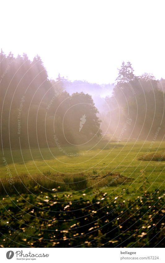 der herbst kommt.... Nebel Herbst Stimmung dunkel Wiese Wald Licht Märchen Kreativität rein Außenaufnahme träumen wirklich Lichtstrahl Natur Traurigkeit