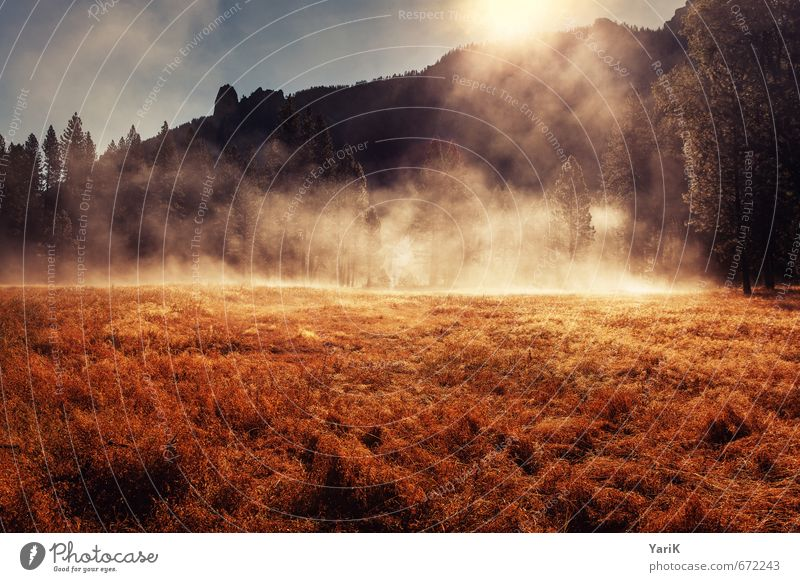 Golden Fog Natur schön Sommer Sonne Baum Landschaft Wald Berge u. Gebirge Umwelt Wiese Herbst Gras Frühling braun gold Nebel