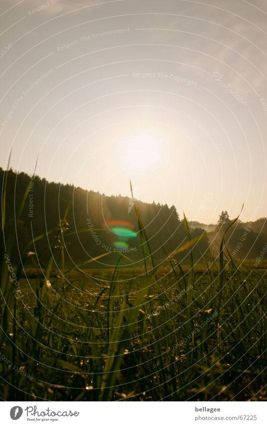 dunkelheit umfängt mich Natur Sonne Wald Wiese Gras Stimmung Blendenfleck Lichtfleck