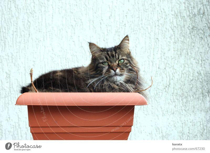 Katze im Kübel Pflanze Sommer Tier Erholung Garten Freizeit & Hobby