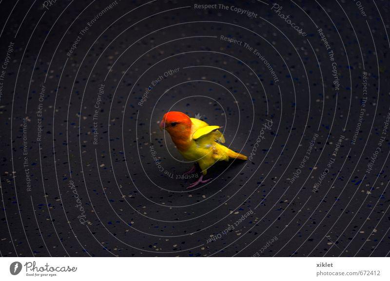 Natur alt schön Tier gelb Bewegung klein Freiheit außergewöhnlich Vogel fliegen Angst elegant frei verrückt Coolness
