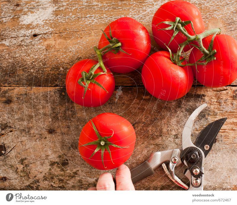 Hand rot Gesunde Ernährung Holz Gesundheit Lebensmittel Wachstum frisch Finger Kochen & Garen & Backen Gemüse Ernte Bioprodukte geschnitten Tomate Gartenarbeit
