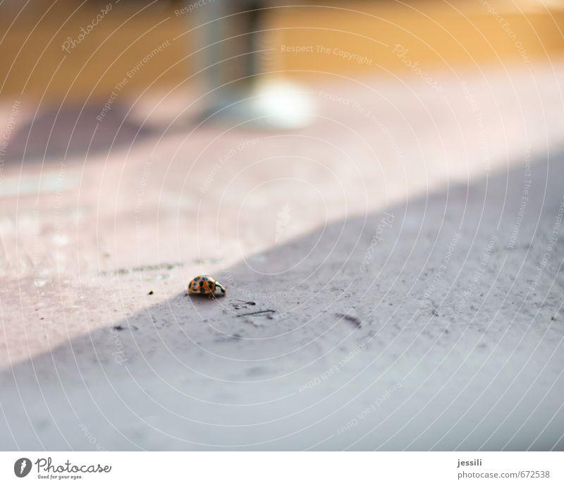 . Sonne rot Tier schwarz Bewegung klein Glück Warmherzigkeit einfach einzigartig Zeichen trocken rennen trashig Geborgenheit Käfer