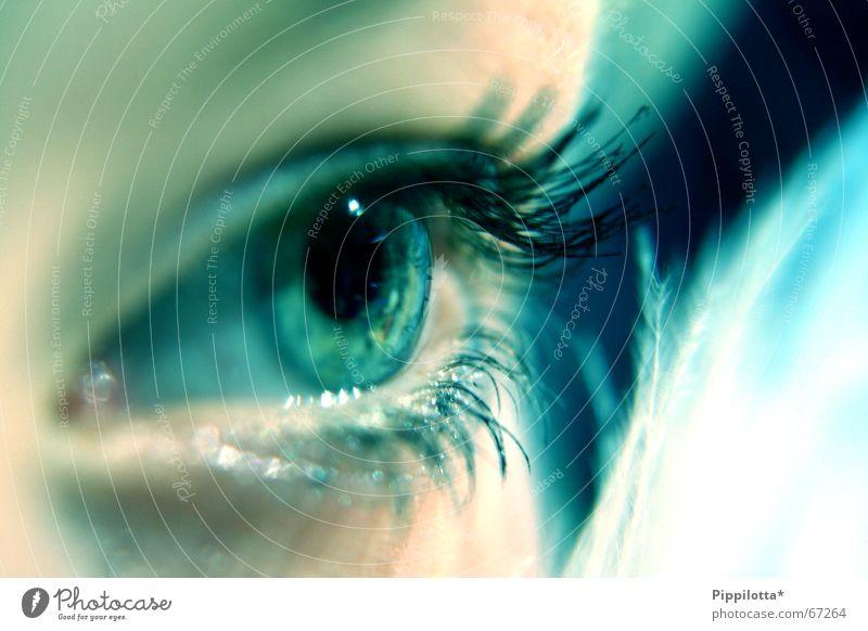 blaues auge Mensch schön Gesicht Auge kalt braun glänzend Perspektive Aussicht weich Feder beobachten Klarheit zart entdecken Schminke