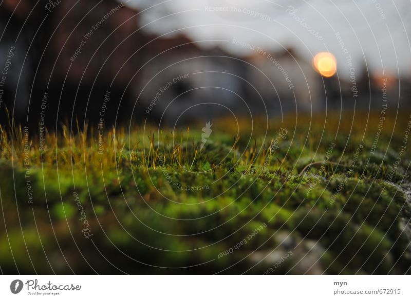 Moos Natur grün Pflanze Einsamkeit ruhig Tier Umwelt Traurigkeit Herbst Gras Mauer Stein braun Garten Stimmung Park
