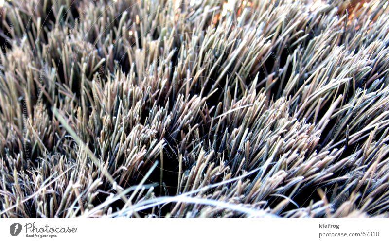 ...kehren gut Gras grau Erde Feld geschlossen Handwerk Flur Besen Miniatur Kehren kratzig