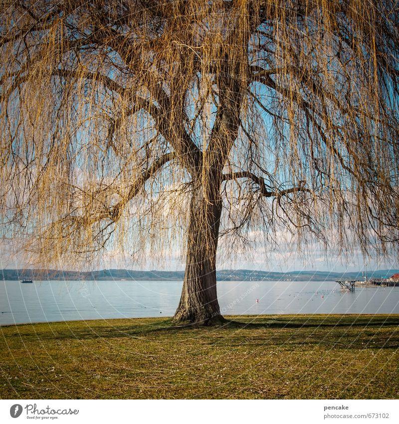 auftanken Natur Landschaft Frühling Schönes Wetter Baum Park Seeufer Zeichen ästhetisch authentisch außergewöhnlich Kraft Trauerweide Weide Bodensee Meersburg