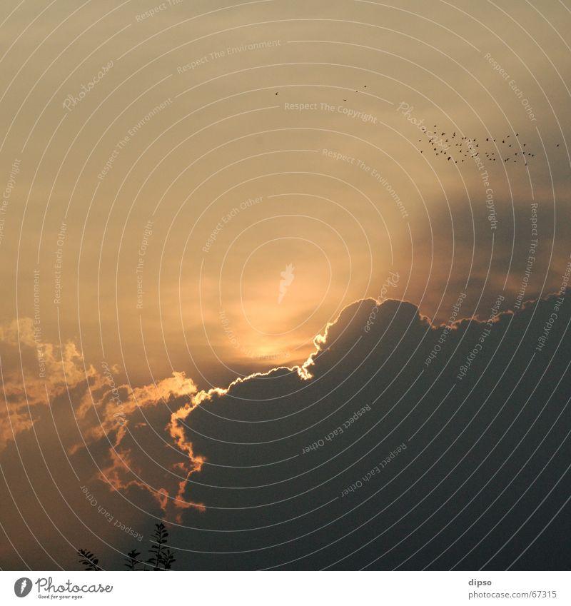 Morgens um 6 Sonnenaufgang Wolken Vogel bedrohlich Licht Beleuchtung Schatten Kontrast