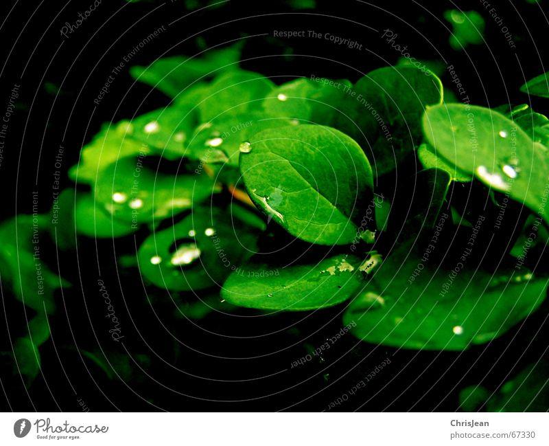 Titellos schön Erholung ruhig Zoo Natur Wasser Wassertropfen Urwald träumen nass grün beads water drip sheet sheets dream wet wetness mehrfarbig Morgen