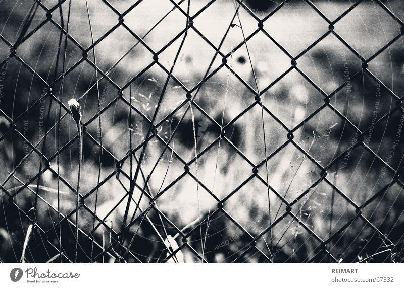 sieben Zaun schwarz weiß Gedanke gefangen Garten Gefühle Denken grass Einsamkeit