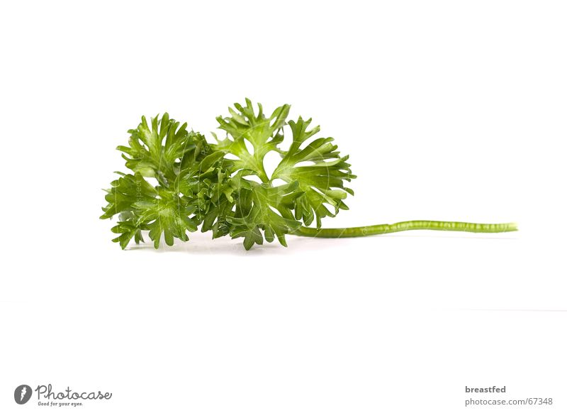 petersilie grün Ernährung Kräuter & Gewürze lecker Mittag Petersilie
