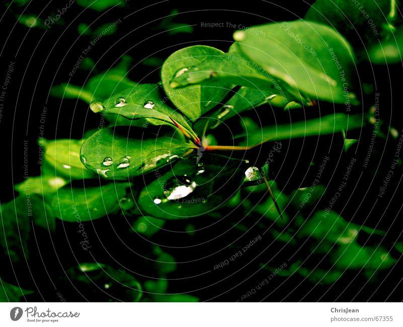 Titellos Natur Wasser grün schön Pflanze Sommer Tier ruhig Landschaft Wärme Frühling Garten träumen Park Stimmung nass